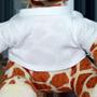 Giraffa Sara Con Foto